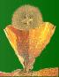 Progesterone crystal